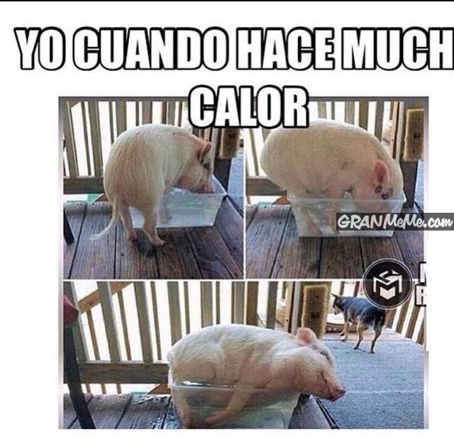 Ola de memes sobre el calor en Puerto Rico , Univision Puerto Rico , Univision