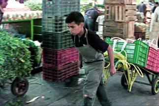 Resultado de imagen para adolescentes pobres trabajando