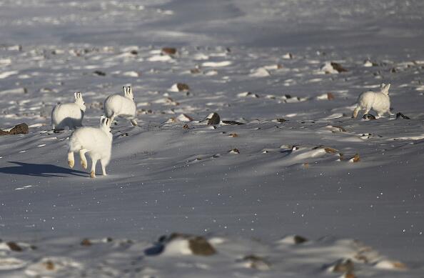 Las impresionantes fotos del Ártico que dejó una misión de la NASA Artic...