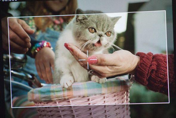 Y así fue como se comenzó a trabajar en este video en el que el gato hac...