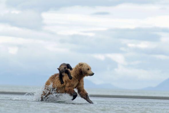 Su madre trataba de alcanzar un pescado para alimentarse junto con su cría.