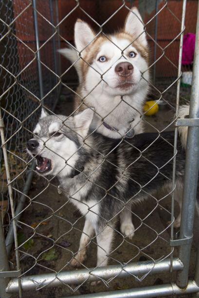 Desde mascotas comunes como perros y gatos