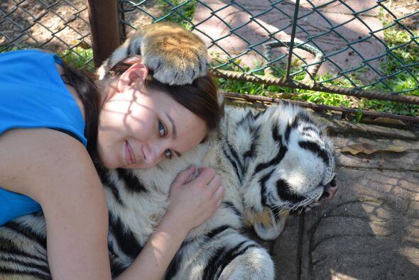 Las hermanas se encontraron con un Tigre en el santuario 'Tiger Kingdom'...