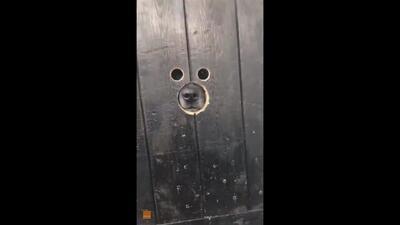El videíto: La manualidad perfecta para tu perro entrometido