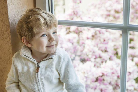 1. Mantén el aire limpio, sobre todo cuida que tus ventanas permanezcan...