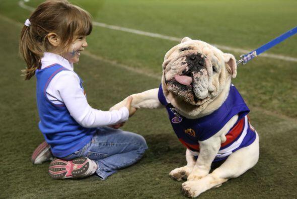 Bulldog: Los hay de dos tipos, inglés y francés y, pese a...
