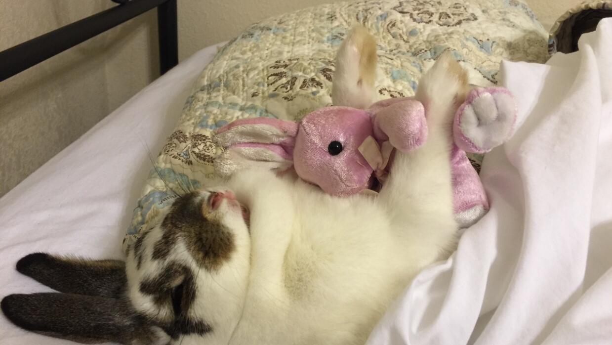 ¡Una conejita que le gusta el spa! image.jpg
