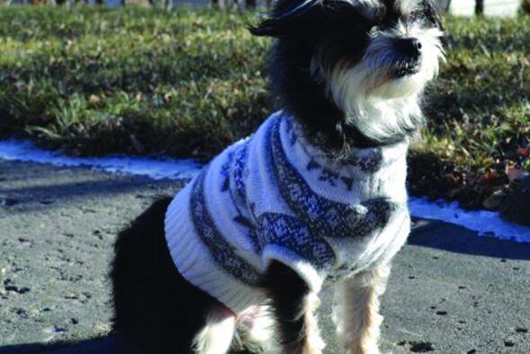 Además Meredith hace algunas prendas para perros como suéteres encantado...