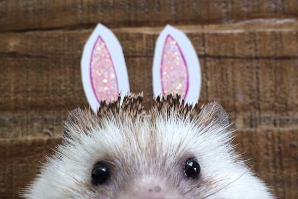 Con un par de pedazos de papel puedes transformar un erizo en un conejo.