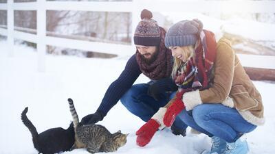 10 consejos de expertos para ayudar a los animales a resistir el frío extremo