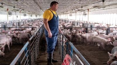 In Texas and Iowa, pig farmers continue to support Trump despite Mexican tariffs (in PHOTOS)