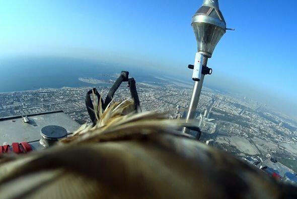 Este animal realizó el vuelo más alto jamás grabado desde una estructura...