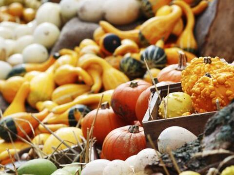 Con el otoño, hay algunas recetas caseras que se vuelven ideales...