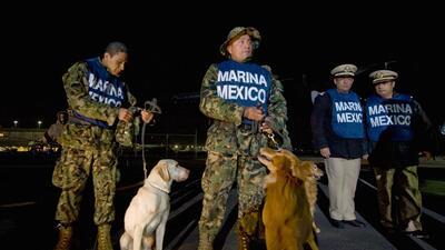 """Los """"huele-Chapo"""" están entrenados para reconocer el olor del capo"""