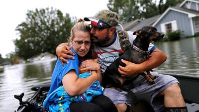 Las mascotas, los otros afectados por las inundaciones de Harvey (FOTOS)