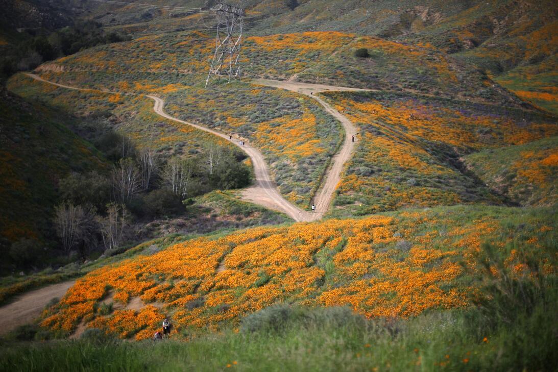 Flores en California