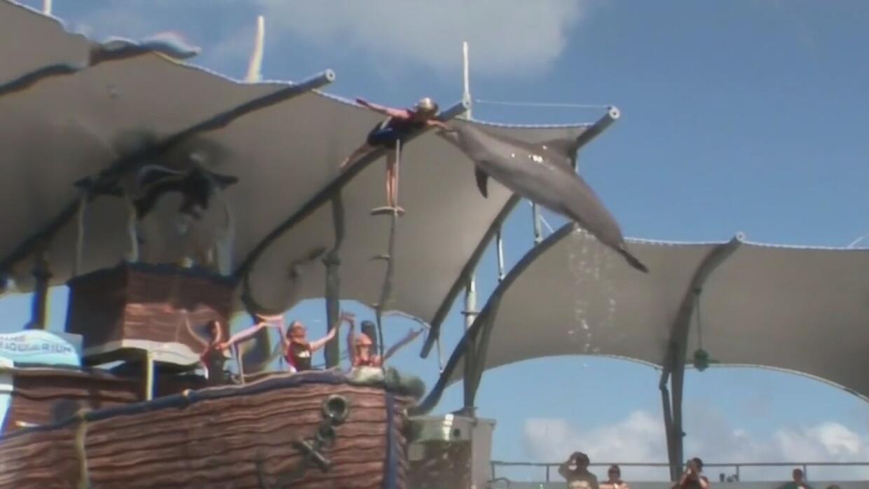 El Miami Seaquarium ofrece descuentos especiales para los residentes de...