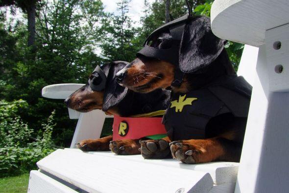 En algunas fotos Crusoe posa junto a su medio hermano Oakley, que es el...
