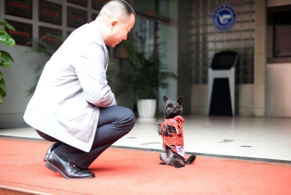 Este gracioso can, aunque sólo parece un perrito adorable, tiene...