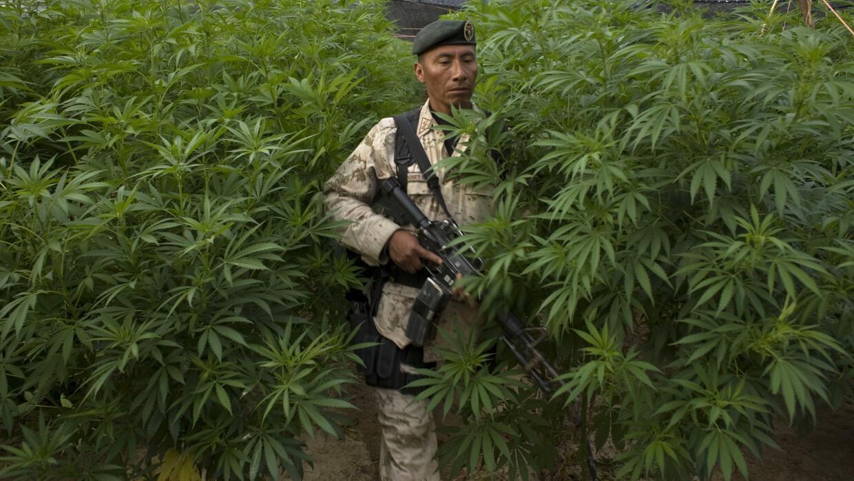 Arturo Sarukhan: Cómo entender la legalización de marihuana GettyImages-...