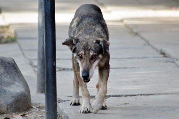 """El perro """"Hachi"""" boliviano da una muestra de lealtad y y perseverancia a..."""
