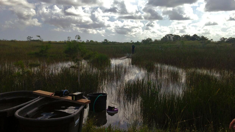 Un experimento dirigido por la Florida International University añade ag...