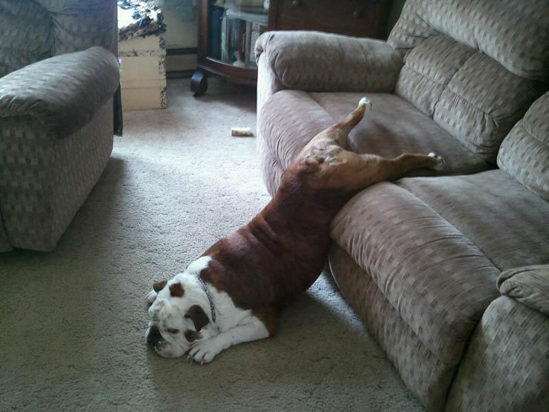 El verano está a la vuelta de la esquina y estos perros lo saben muy bien