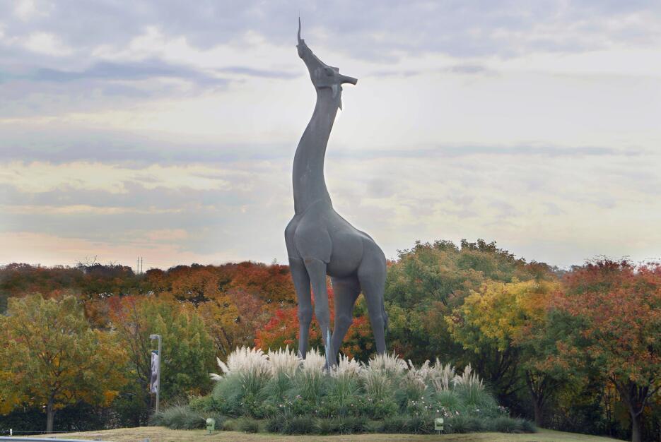 Dan la bienvenida a una jirafa en el zoológico de Dallas EstatuadeJirafa...