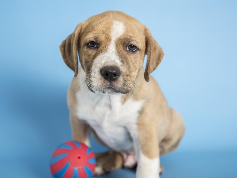 ¡Mascotas que esperan un hogar en Phoenix!