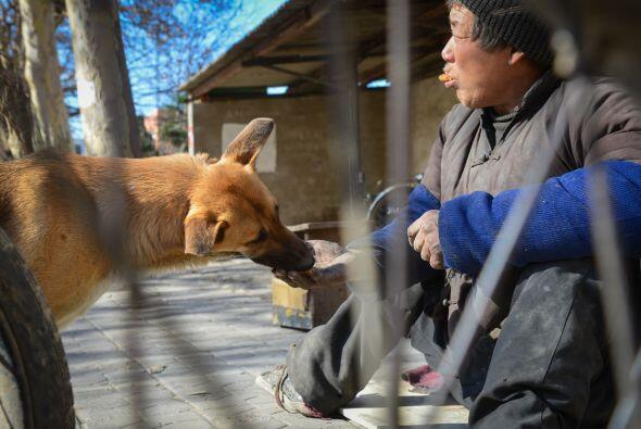 La agencia XinHuaNet mencionó que el perro de Bo lo sigue a cualq...