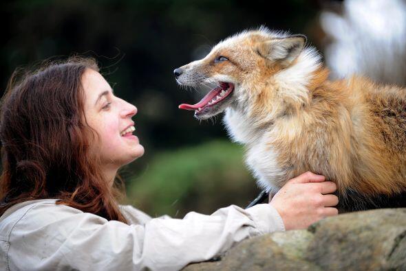 Como los canes, juega a la pelota y mueve la cola cuando está contento.
