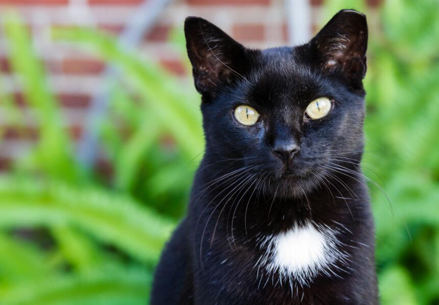 Conoce el misticismo del gato negro  9.jpg