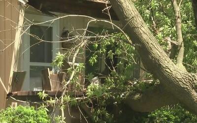 Revisaron su casa tras sentir un temblor y se dieron cuenta de que tenía...