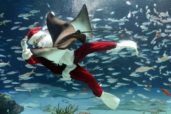 Santa disfruta de nadar con mantarraya.