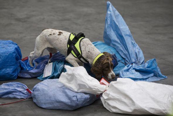Estos perros son capaces de olfatear drogas de tipo A, tabaco, dinero, p...