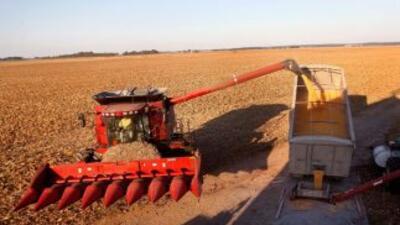 El trigo, el maíz y la soja, sufrieron una fuerte baja en sus precios es...