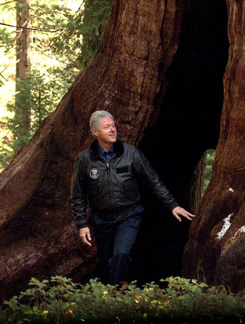 En el 2000 el presidente Bill Clinton decretó el Giant Sequoia National...