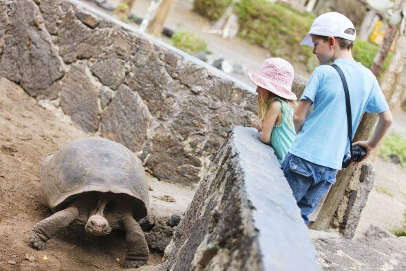 Agrega a tu checklist: las tortugas gigantes e iguanas.
