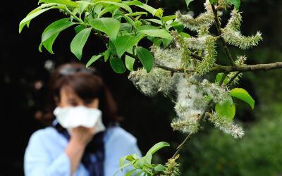 salud alergias