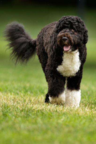 Lo ideal es mostrarle al perro que el amor no es sinónimo de travesura.