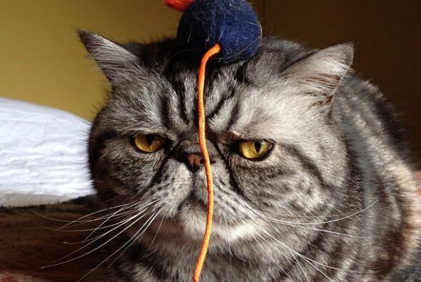 Si eres amante de los gatos, tienes que ver las fotos de este felino.