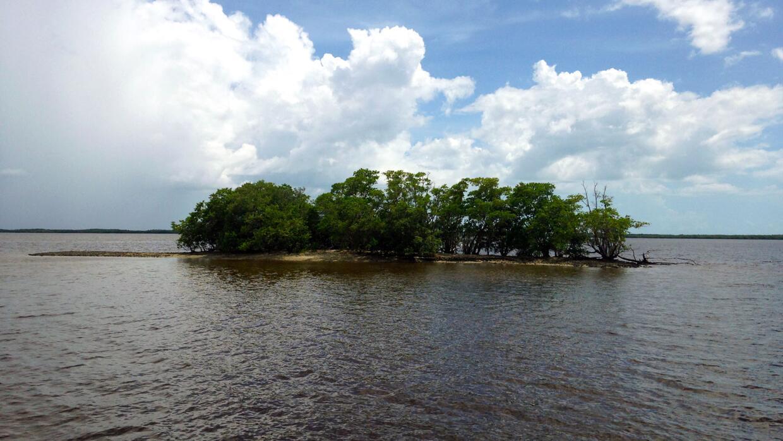 Estos pequeños islotes resguardados por los manglares son una ubicua car...