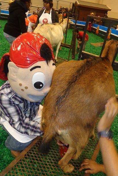 A Pepito le tocó ordeñar una cabra, lo hizo bien pero espe...