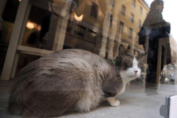 Andrea rescató a varios gatos de la calle abandonados o lastimados para...