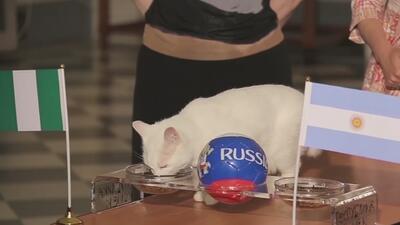 El gato Aquiles falla por primera vez una predicción en el Mundial