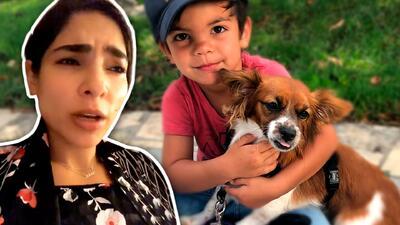 El perro de Alejandra Espinoza mordió a su hijo dos veces y muy angustiada pide ayuda