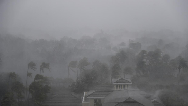 Irma Naples
