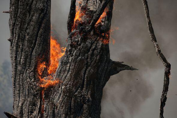 Un árbol carbonizado continúa ardiendo después de ser consumido por el f...
