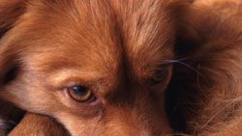 Cientos de mascotas han enfermado en Estados Unidos.
