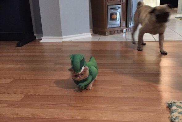 '¡RAWWWR!, np spy un minino. ¡Soy un peligroso dinosaurio!', piensa él.